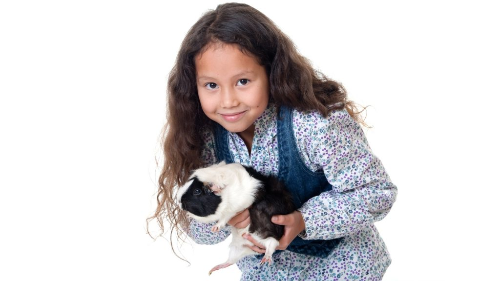 Guinea Pigs Will Teach Your Child to Be Responsible