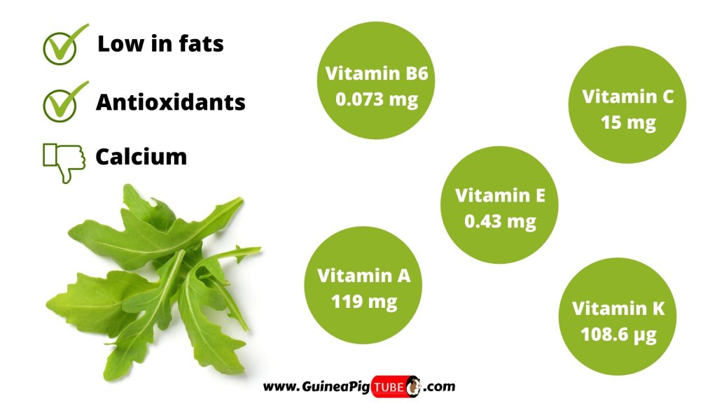 Nutrition Facts of Arugula for Guinea Pigs