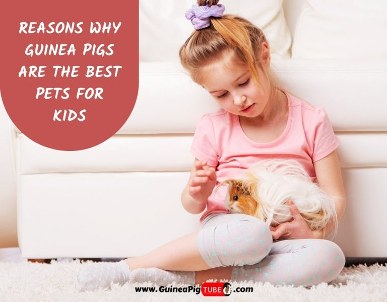 Reasons Why Guinea Pigs Are The Best Pets For Kids