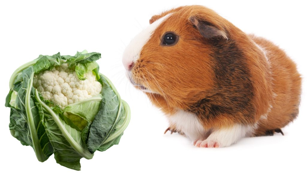Serving Size and Frequency of Cauliflower for Guinea Pigs