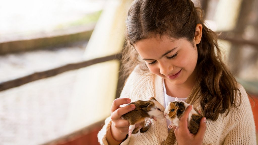 What Is the Appropriate Child's Age to Introduce Guinea Pig as a Pet
