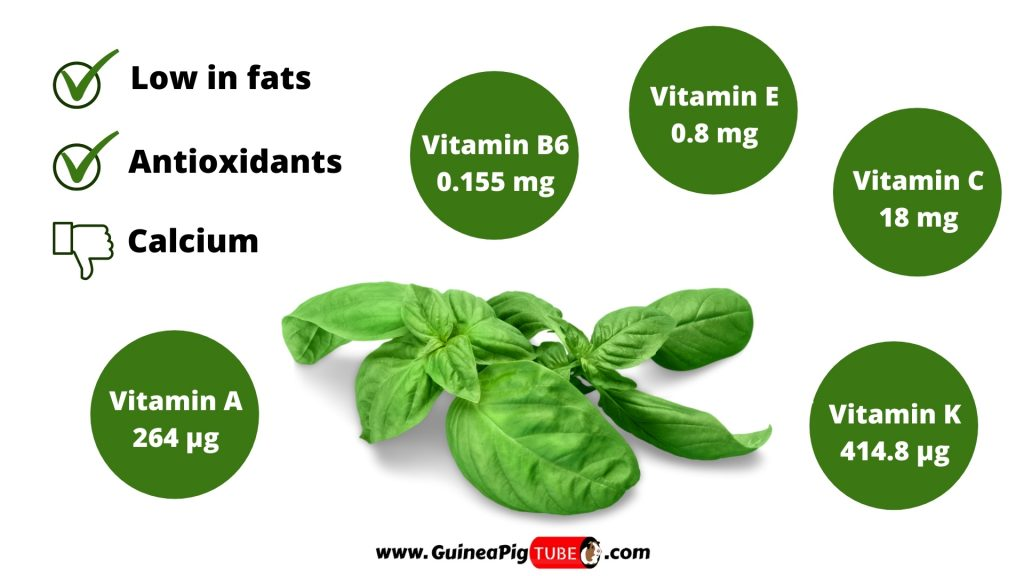Nutrition Facts of Basil for Guinea Pigs