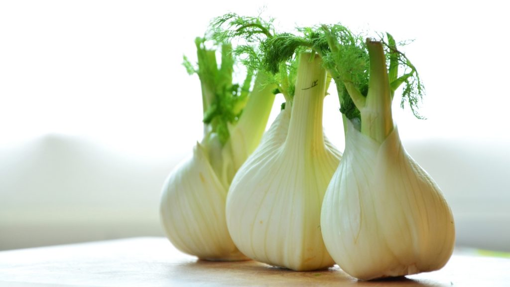 Is Fennel Good for Guinea Pigs Health Benefits