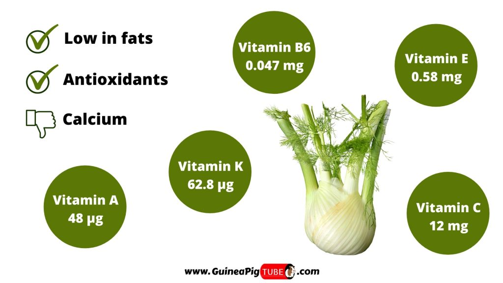Nutrition Facts of Fennel for Guinea Pigs